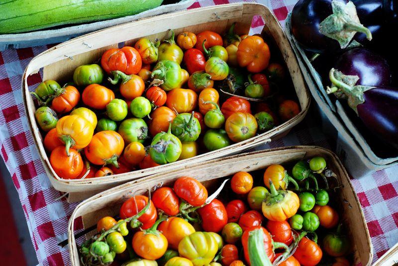 Mini Peppers fall orange green red yellow
