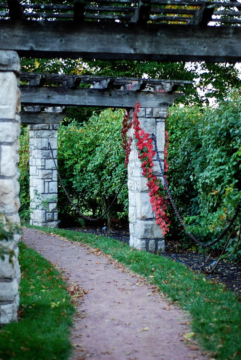 Trellis with red leaves